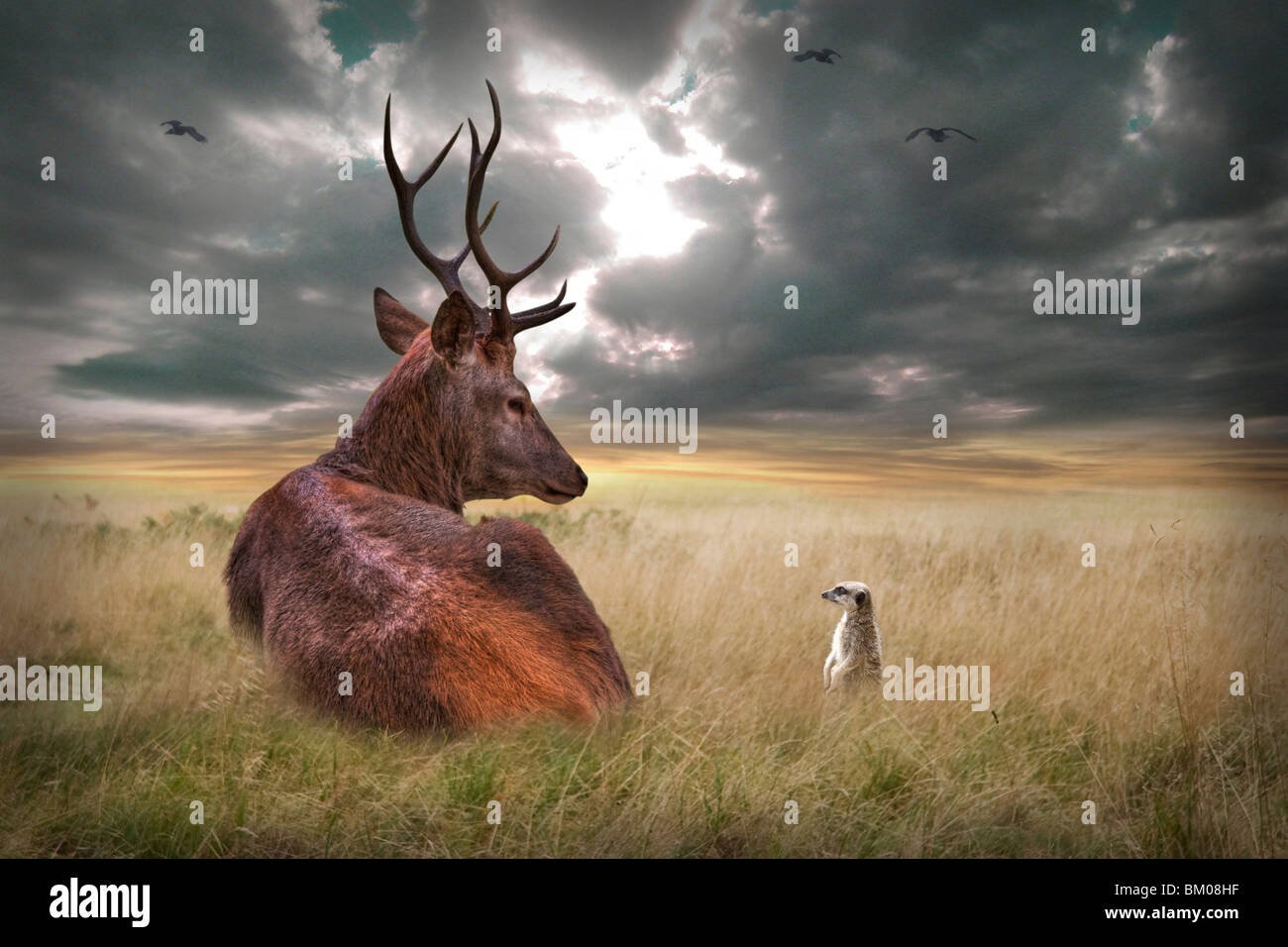 Stag lying down on wide plains with stormy skies - Stock Image