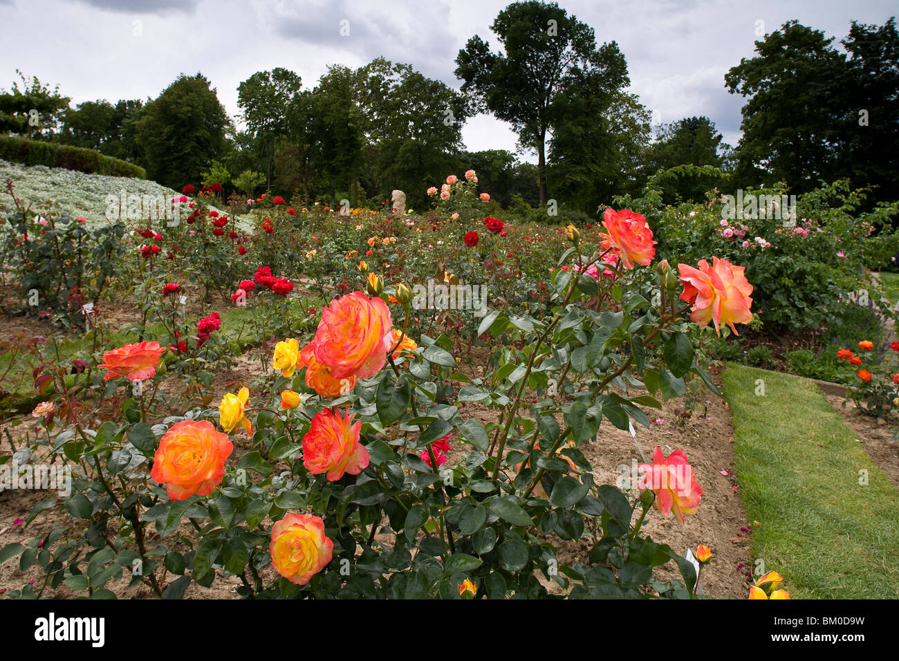 Europa Rosarium in Sangerhausen, the largest collection of roses in the world, Saxony-Anhalt, Germany, Europe - Stock Image
