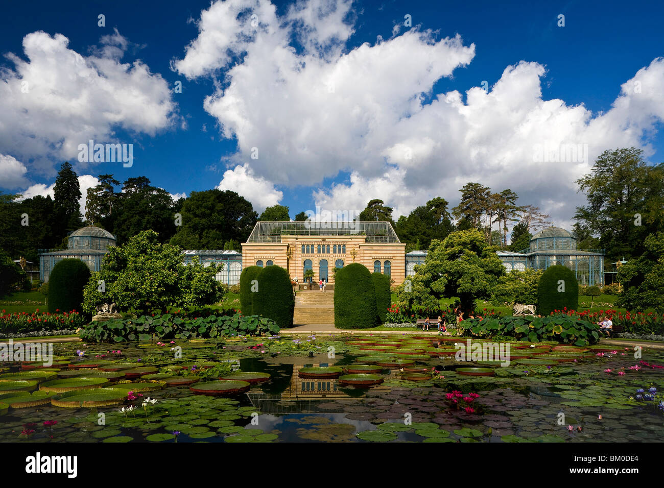 Zoological And Botanical Gardens Wilhelma, Moorish Garden With The Largest  Water Lilies In The World, Stuttgart, Baden Wuerttemb