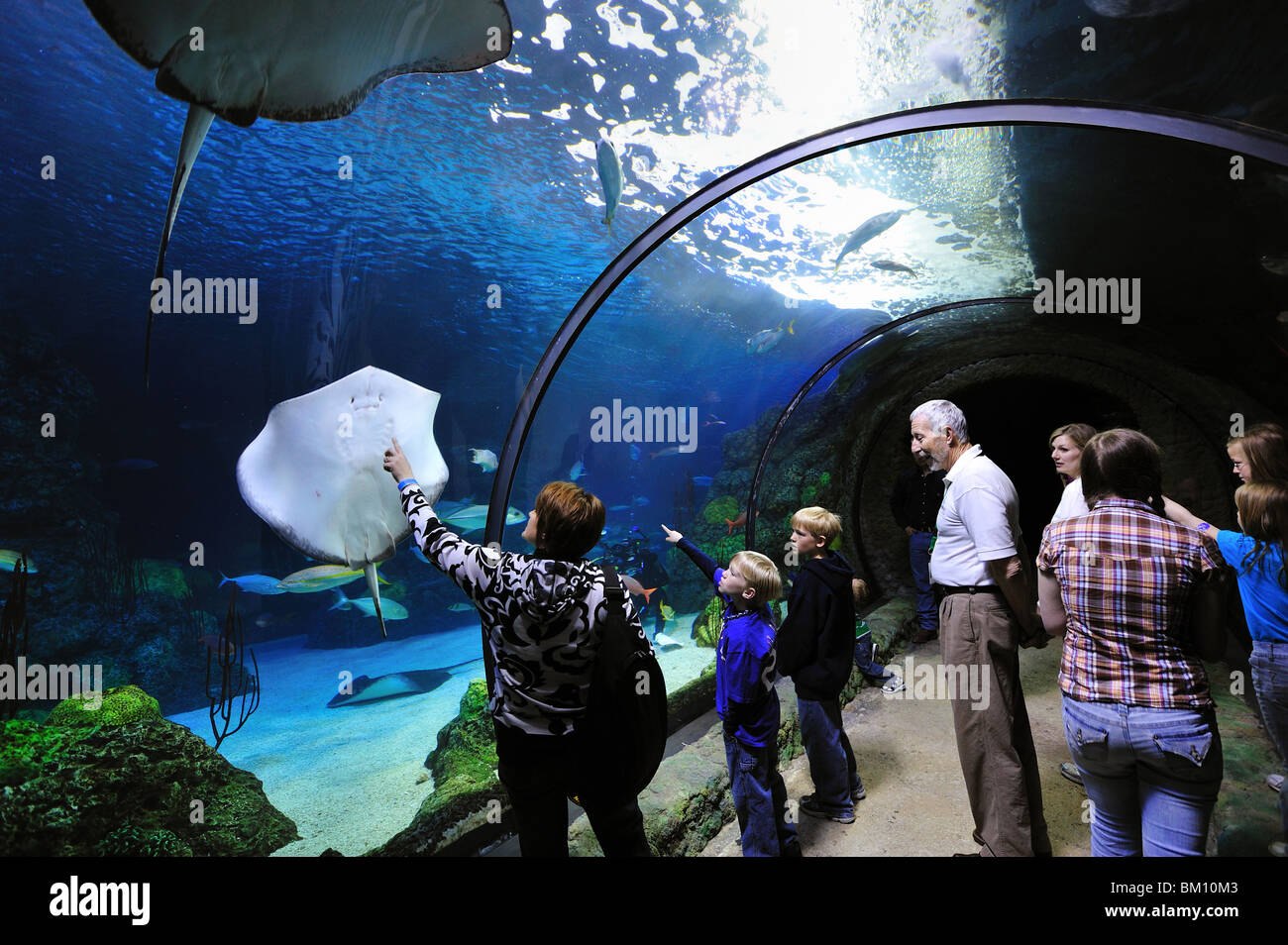 Aquarium tunnel tank, Denver, Colorado - Stock Image