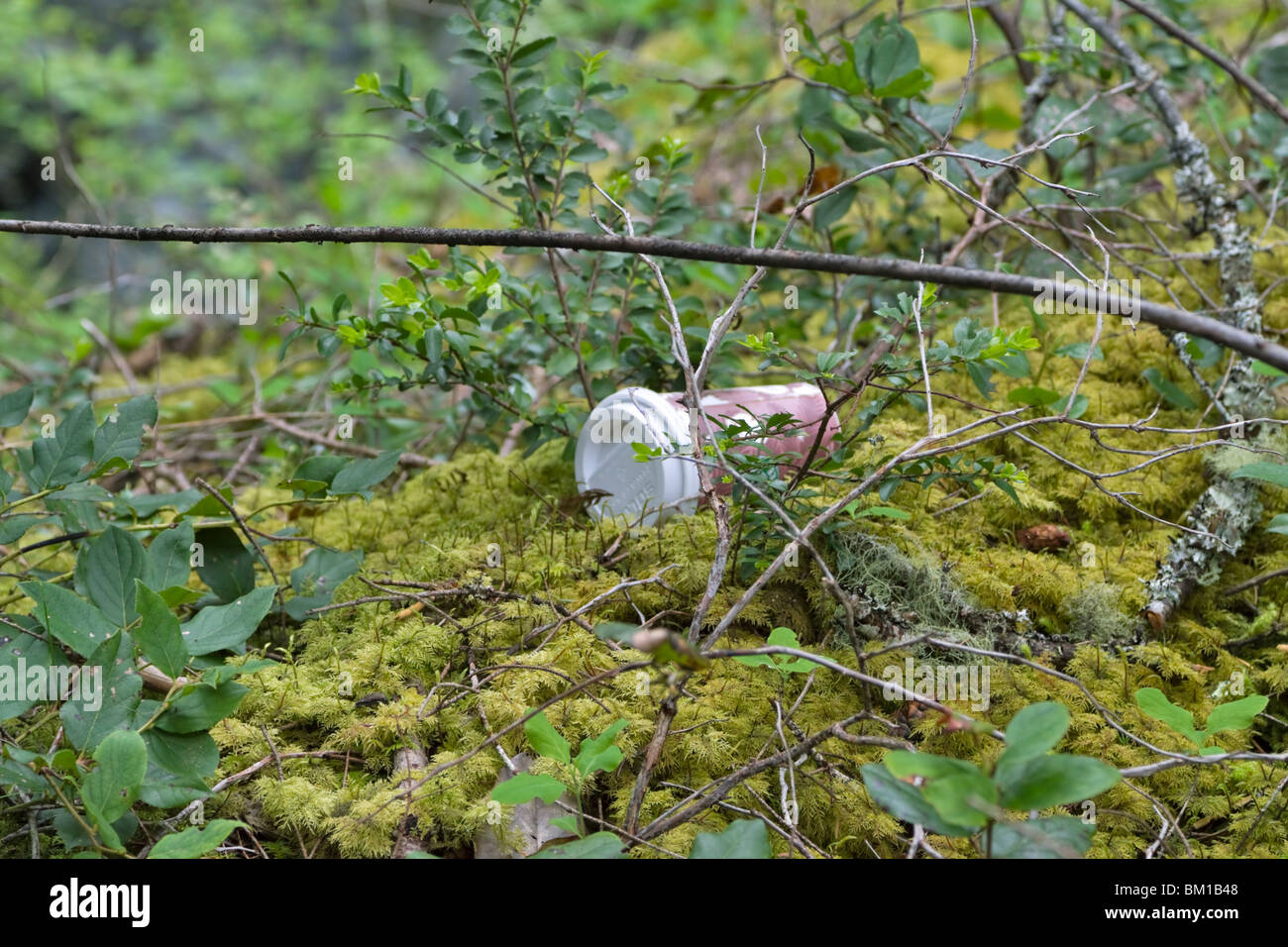 Litter in spring woodlands. An empty cardboard coffee cup with white plastic lid has been carelessly thrown away. - Stock Image