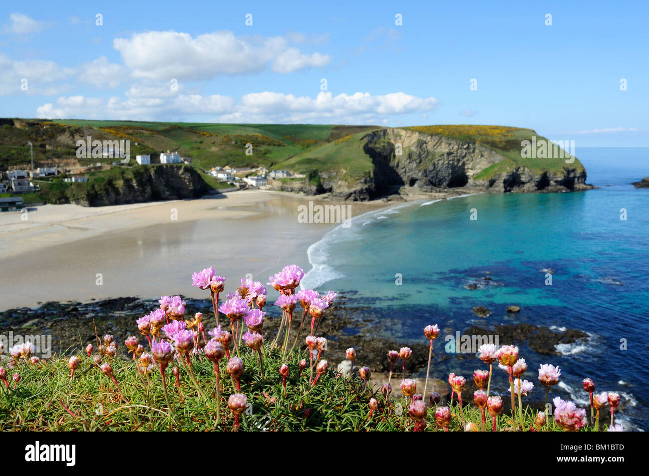thrift in flower above the beach at portreath in cornwall, uk - Stock Image