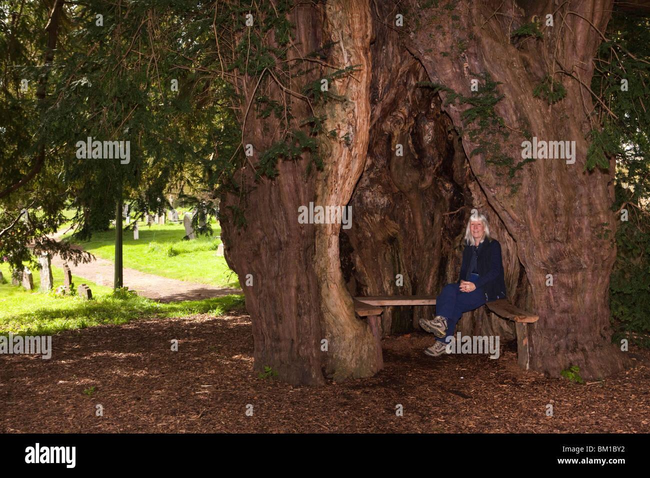UK, England, Herefordshire, Much Marcle, St Bartholomew's churchyard, woman sat on seat inside old hollow yew tree - Stock Image