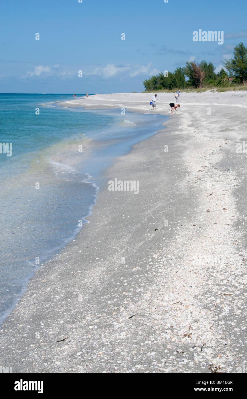 Beach covered in shells, Captiva Island, Gulf Coast, Florida, United States of America, North America Stock Photo