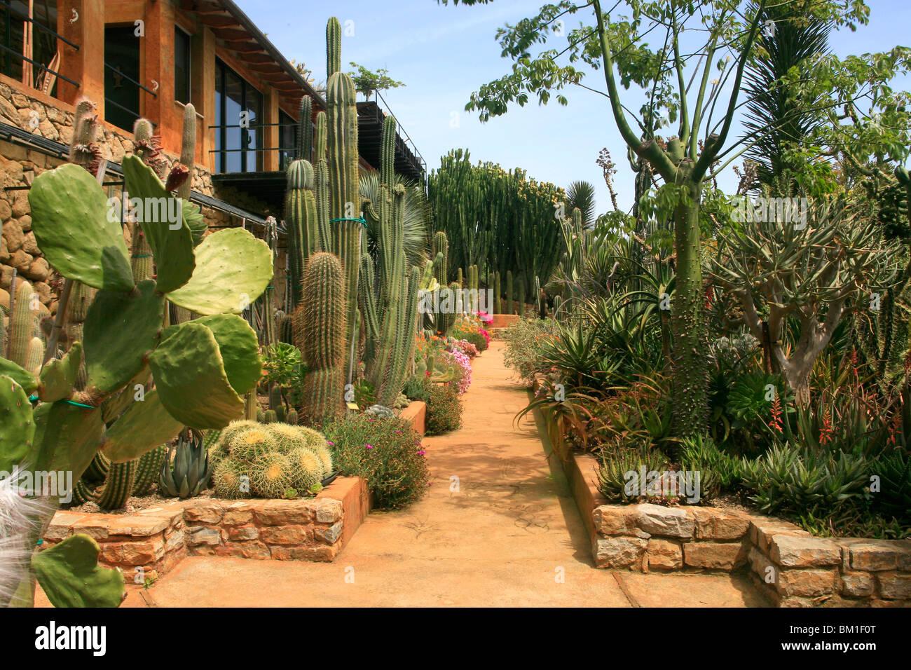 Cactus Garden Stock Photos & Cactus Garden Stock Images - Alamy