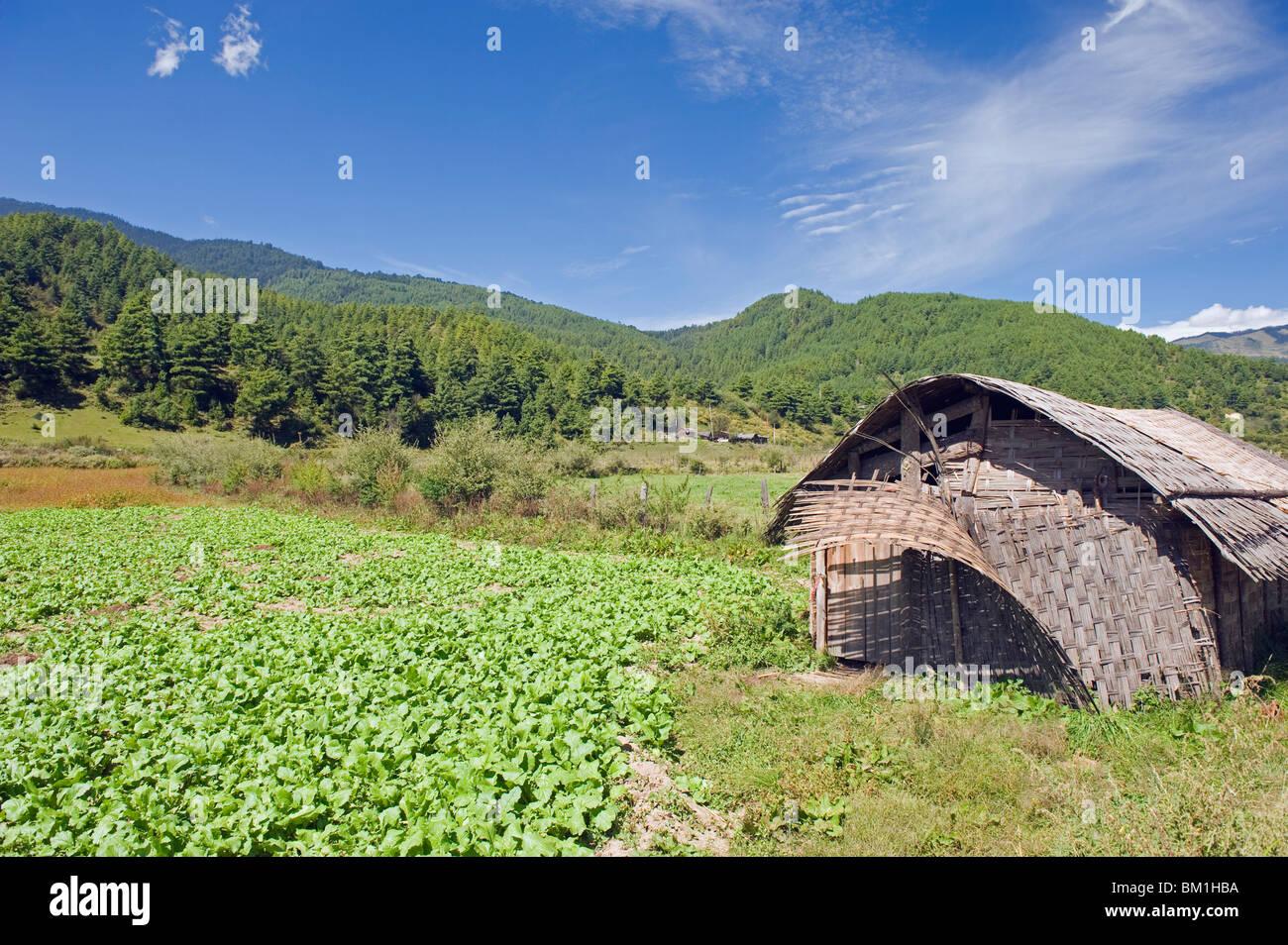 Bamboo hut, Bumthang, Chokor Valley, Bhutan, Asia - Stock Image