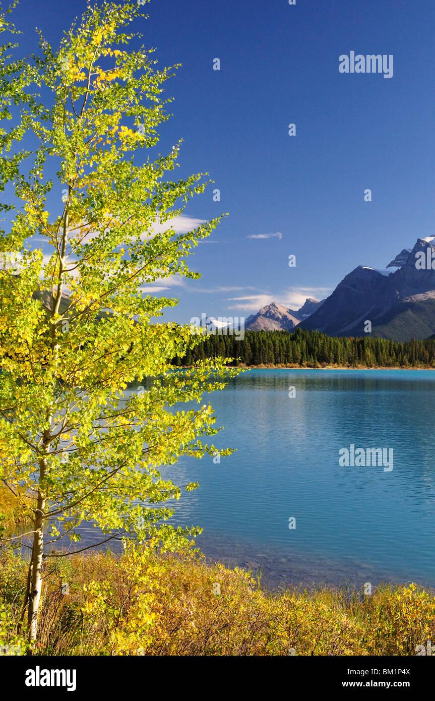 Waterfowl Lake, Banff National Park, UNESCO World Heritage Site, Rocky Mountains, Alberta, Canada, North America - Stock Image