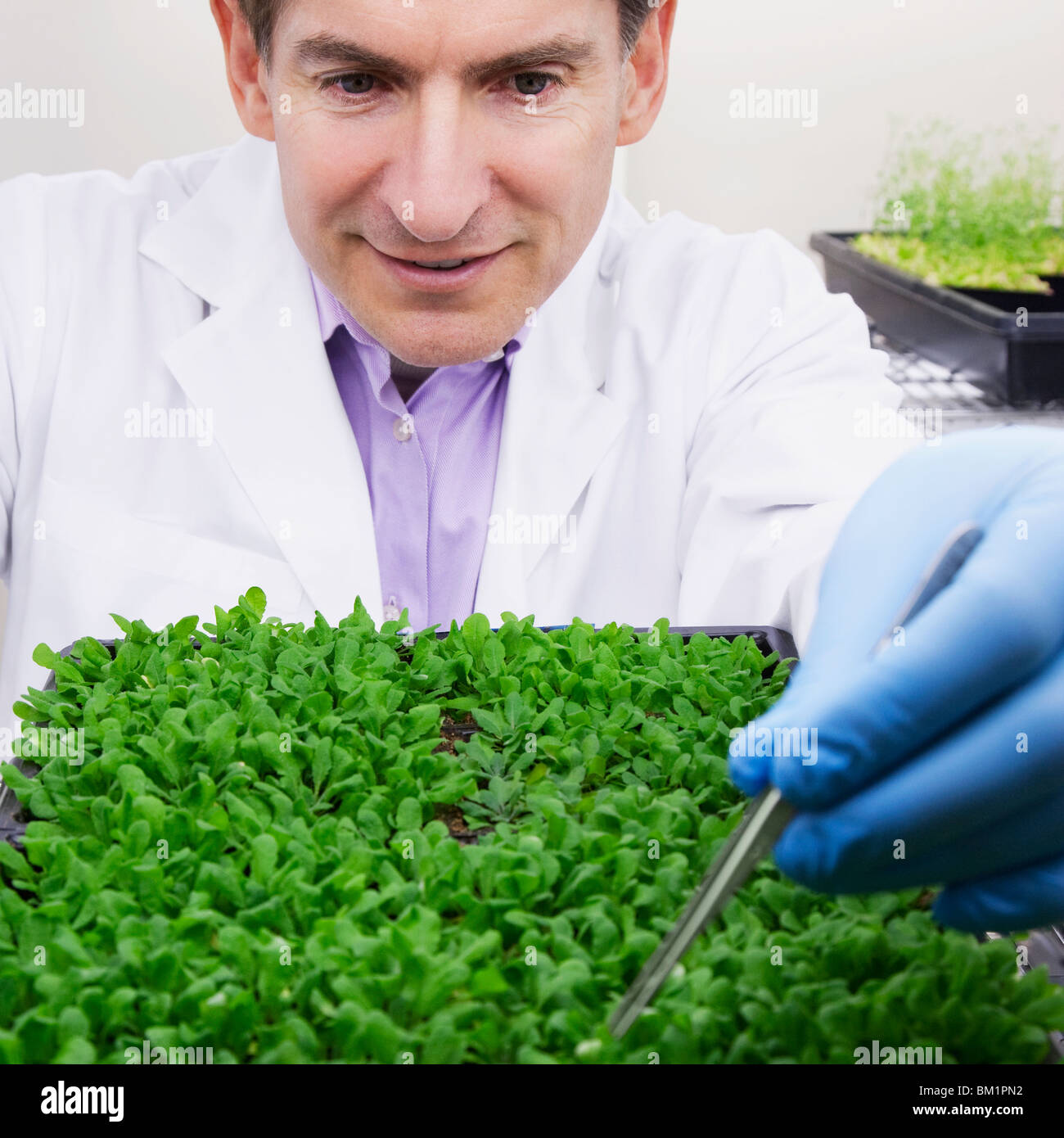 Scientist researching on plants in a laboratory - Stock Image