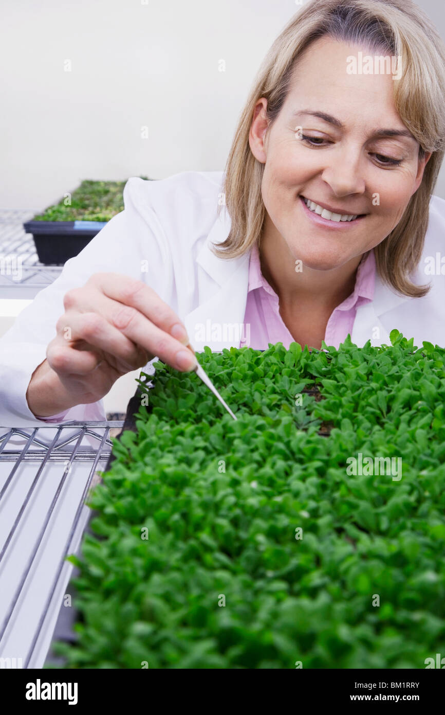 Female scientist researching on plants in a laboratory - Stock Image