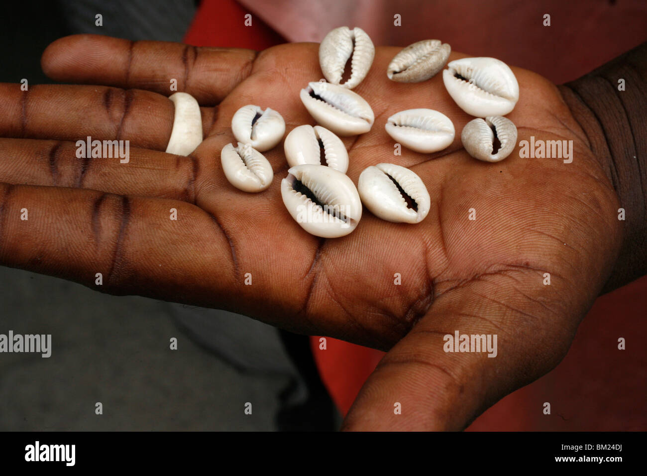 Shells used by fortune tellers, Brazzaville, Congo, Africa - Stock Image