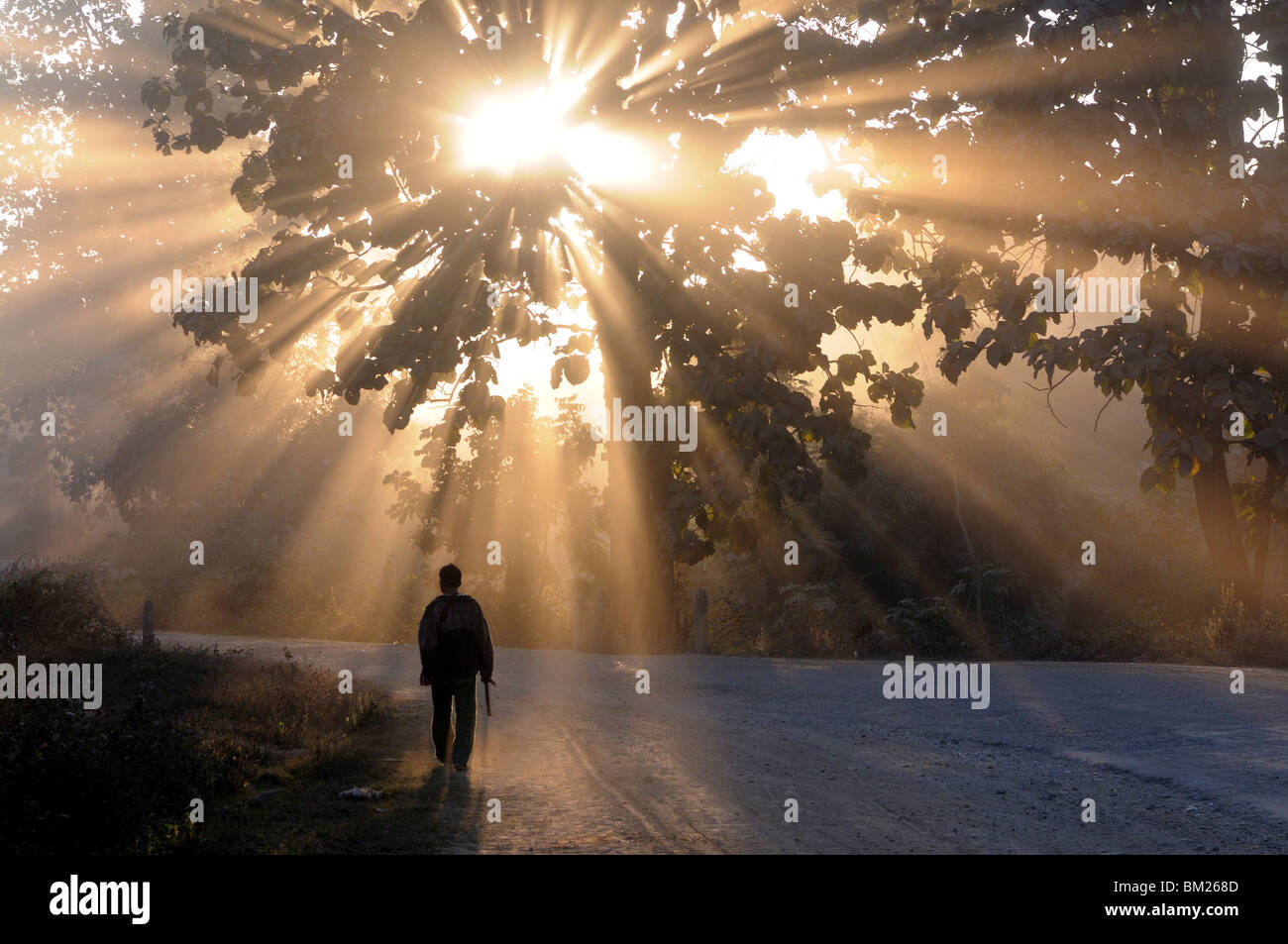 Man walking along a street with sun rays shining through a tree, Highlands, Myanmar (Burma) - Stock Image