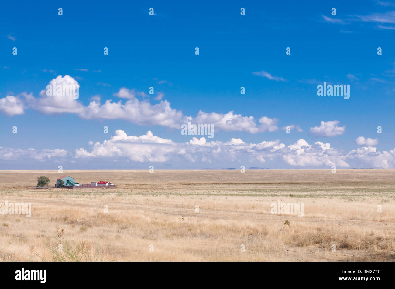 Wheat field with farm, Tamagaly Das, Kazakhstan, Central Asia - Stock Image