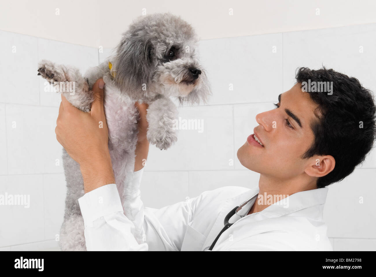 Vet carrying a dog - Stock Image