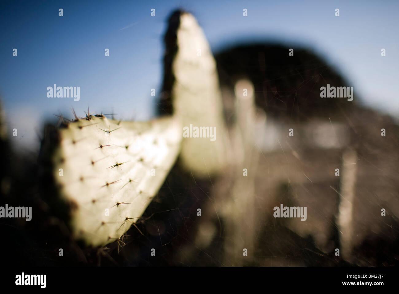 Cactus, Seville, Spain - Stock Image