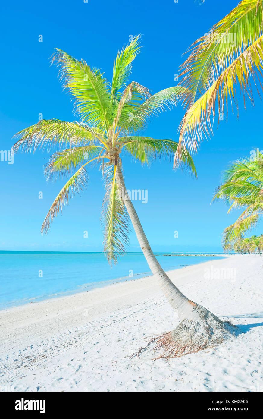 Palm trees on George Smathers Beach, Key West, Florida, USA - Stock Image