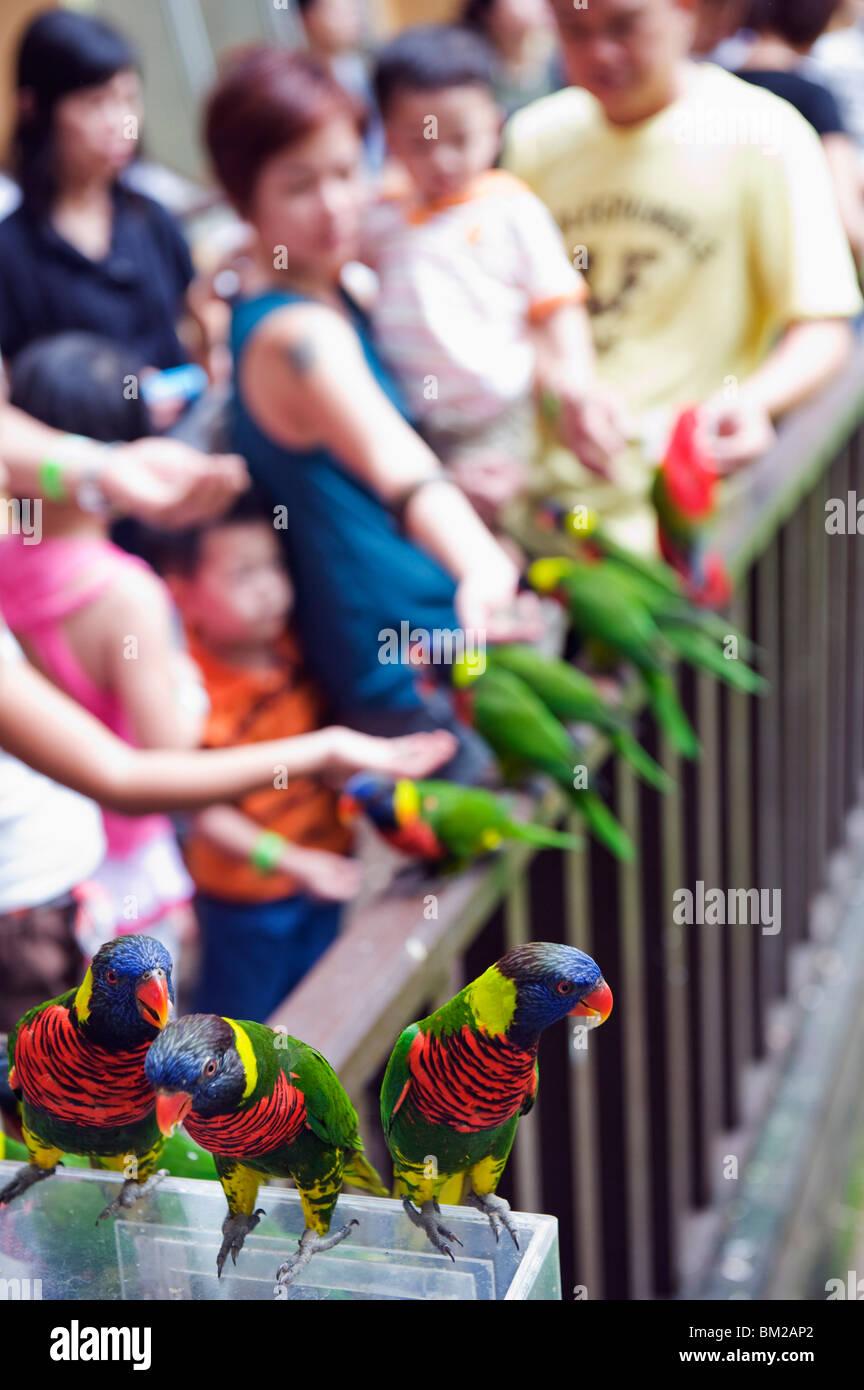 Children feeding parakeets in World of Parrots, KL Bird Park, Kuala Lumpur, Malaysia, Southeast Asia - Stock Image