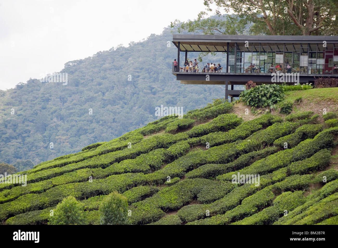 Tea Shop On A Tea Plantation Boh Sungai Palas Tea Estate Cameron Stock Photo Alamy