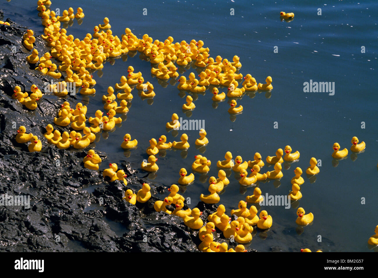 rubber ducks in a pond stock photo 29560083 alamy