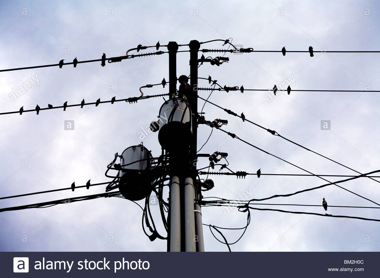Sihlouettes of birds perched on utility wires. Kansas, United States. - Stock Image