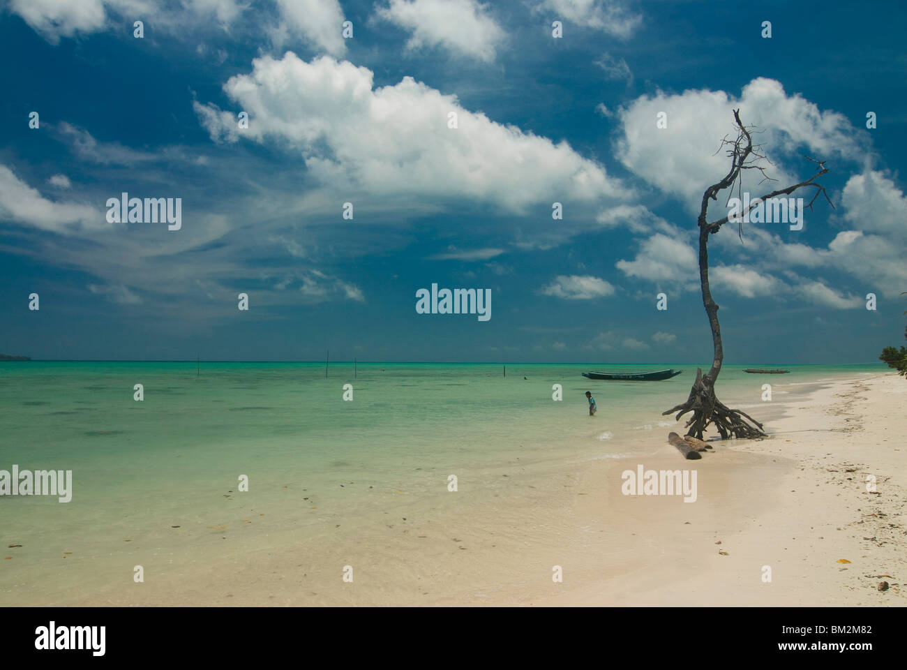 Leafless tree on a beautiful deserted beach, Havelock Island, Andaman Islands, India, Indian Ocean - Stock Image