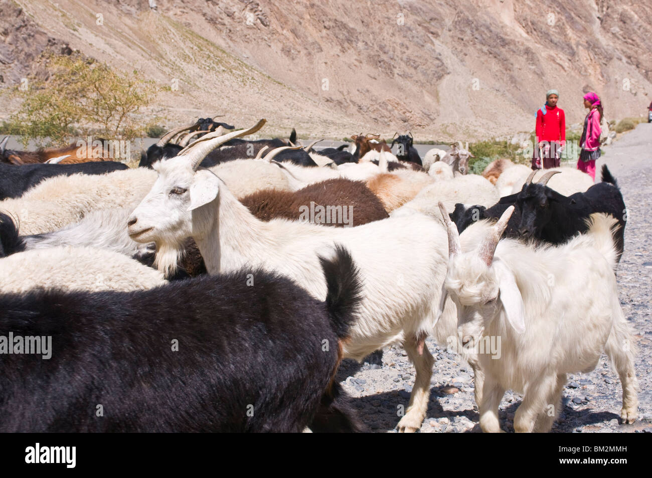 Two girls with herd of goats, Wakhan Valley, The Pamirs, Tajikistan - Stock Image