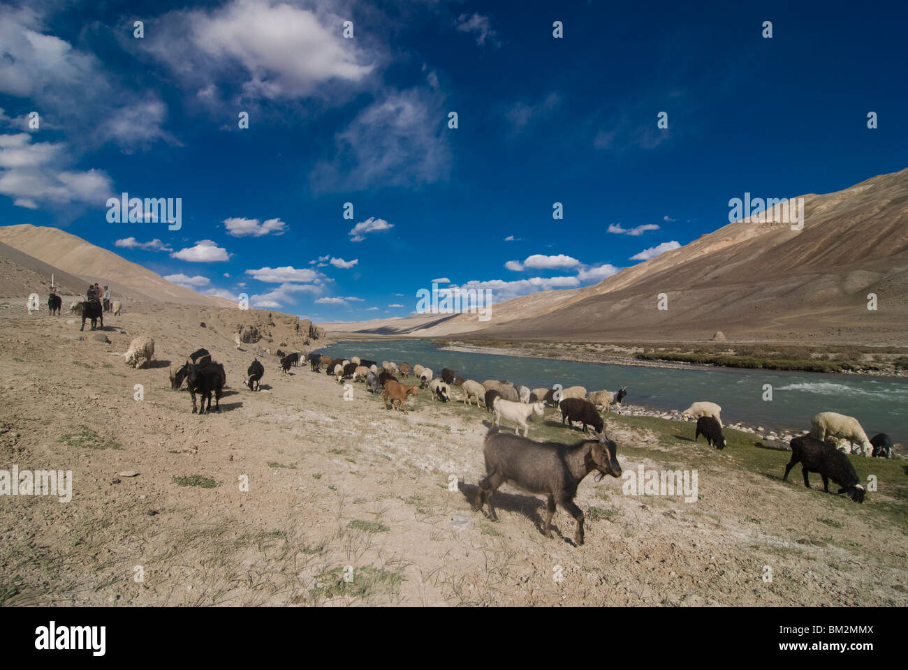 Landscape, river and herd of goats, Wakhan Valley, Tajikistan - Stock Image