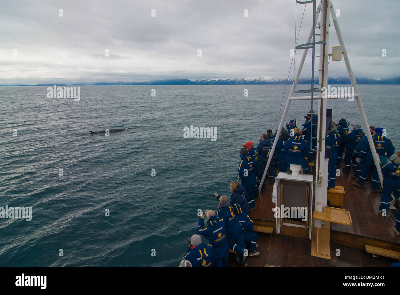 Trawler with tourists watching a whale, Husavik, Iceland, Polar Regions - Stock Image
