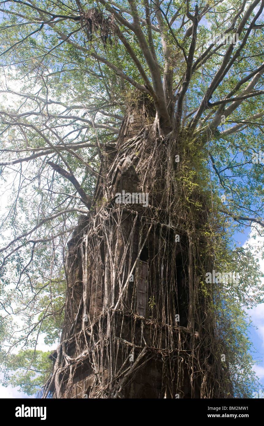 Overgrown church with big roots, Ross Island, Andaman Islands, India - Stock Image