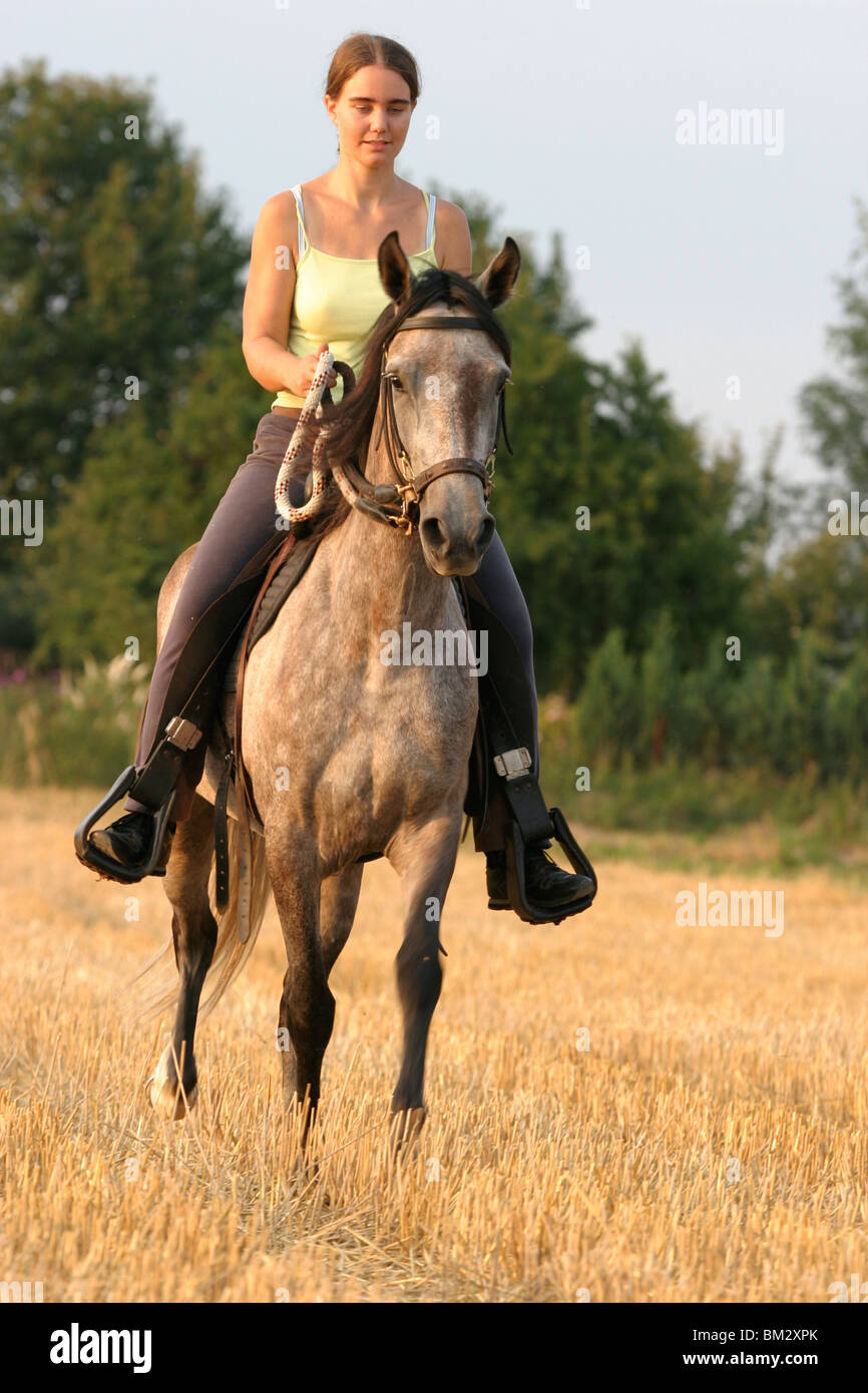 Pferd und Reiter / horse and horsewoman Stock Photo ...