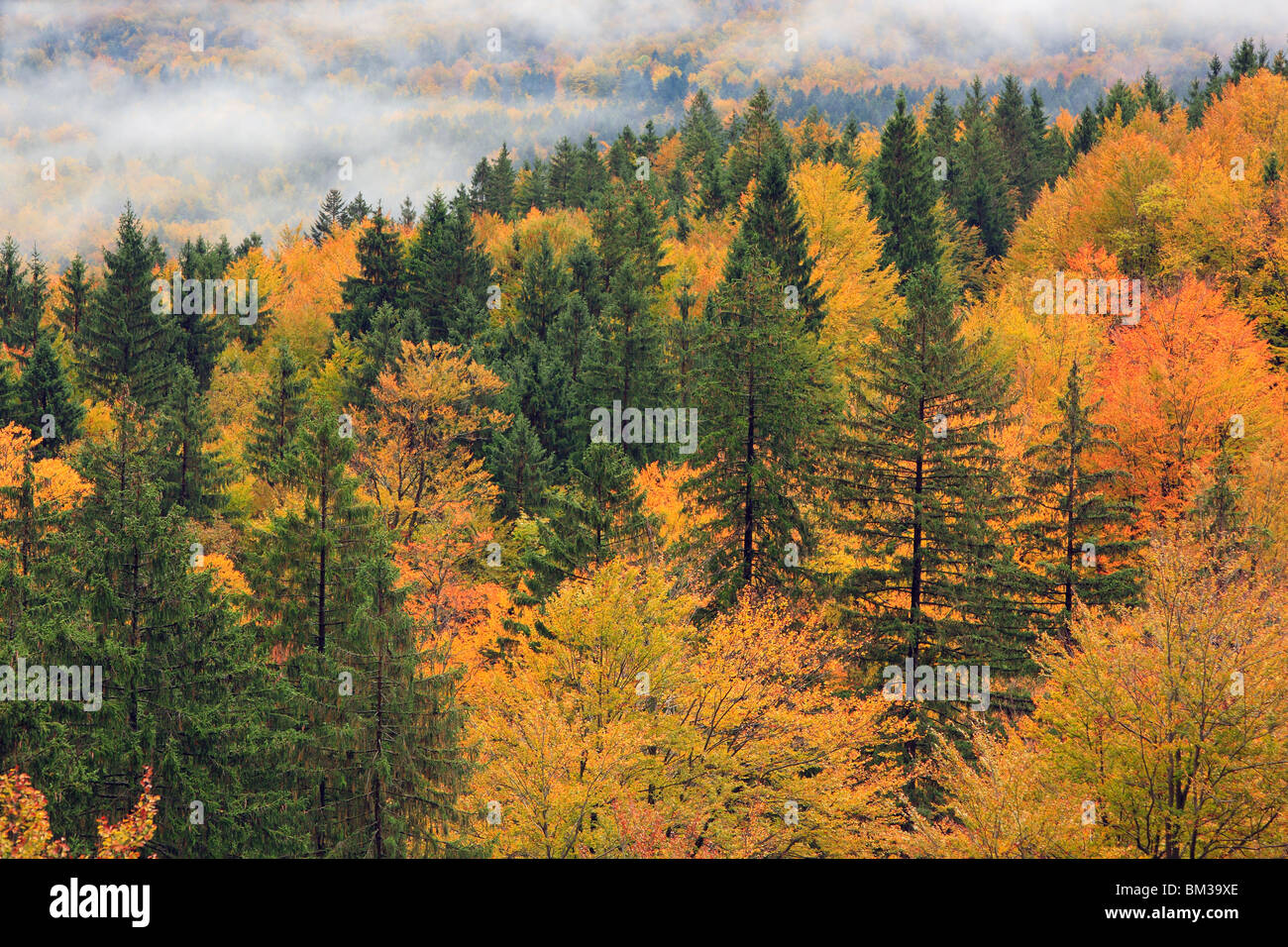 Autumn mists over the Bohinj Valley near Ribcev Laz, Gorenjska, Slovenia - Stock Image