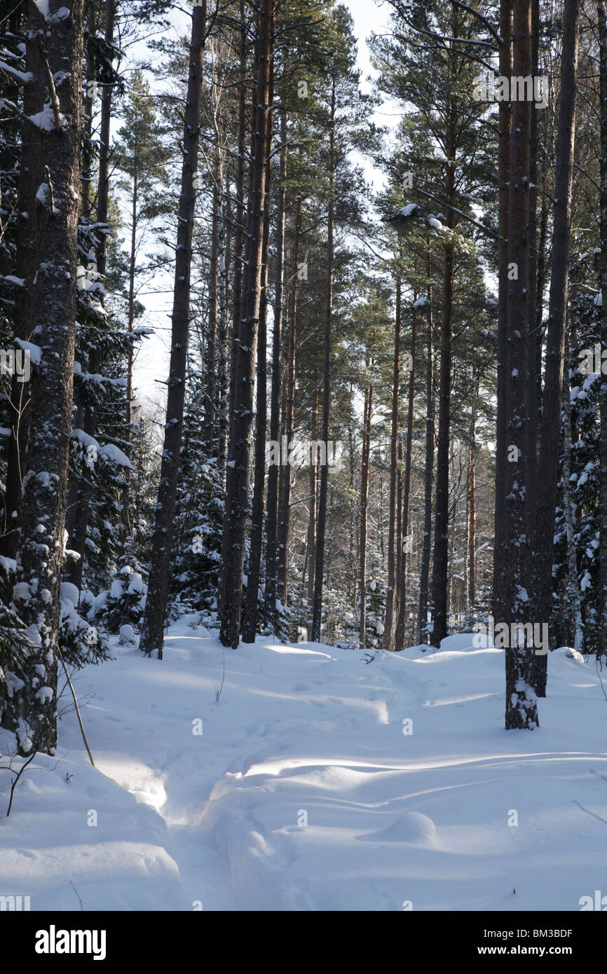 Path track through snow covered forest near Godby on land Aland archipelago between Finland Sweden Winter Stock Photo