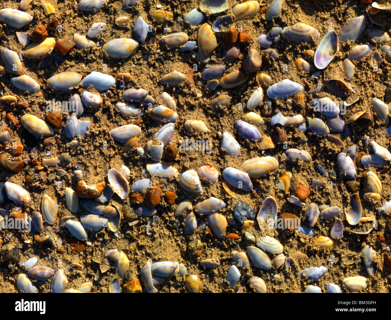 Shells & Pebbles On Beach - Stock Image