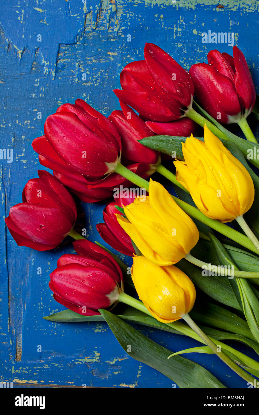 Red and yellow tulips on old worn blue table - Stock Image