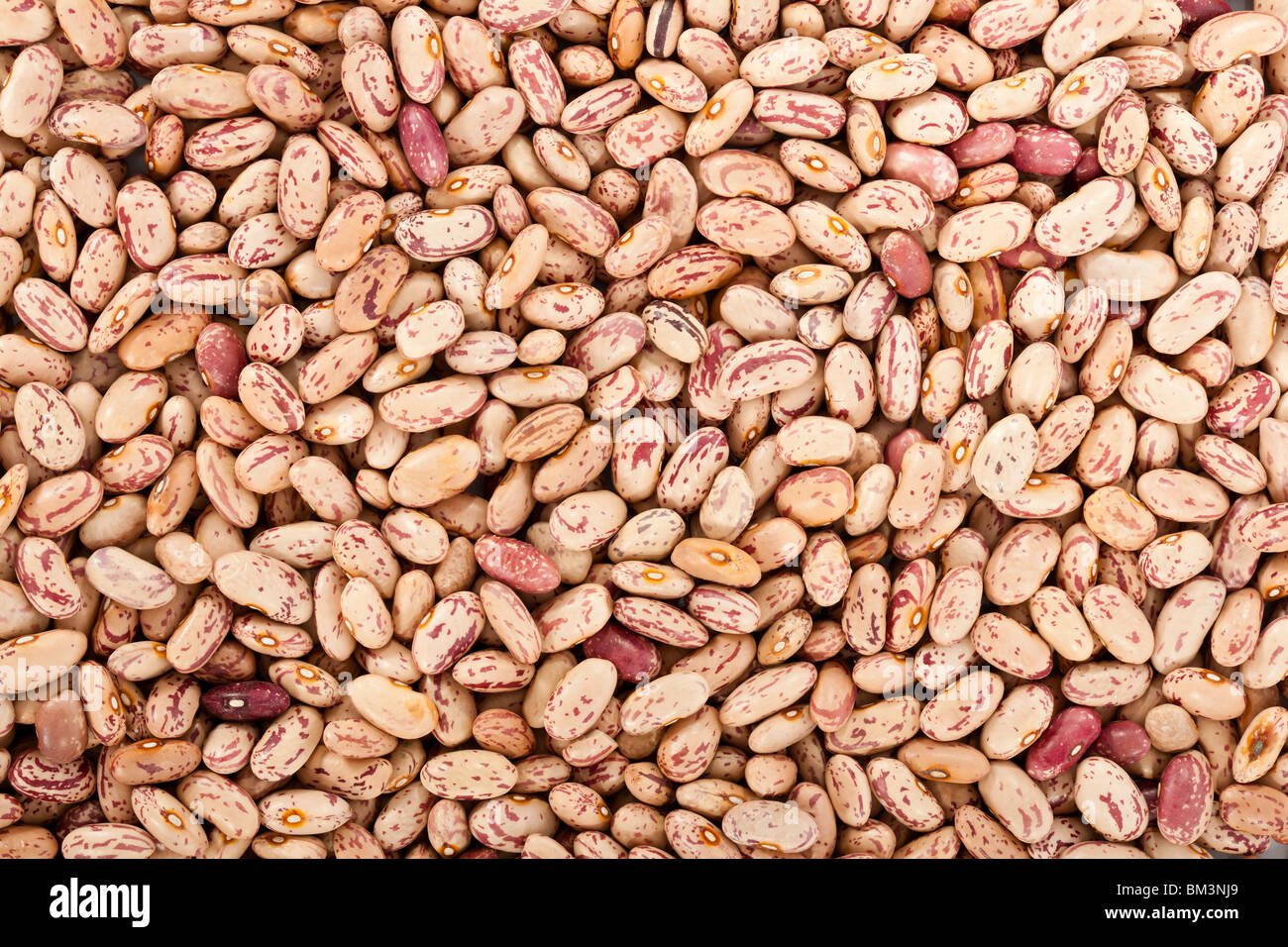 Pinto beans or mottled beans in a background - Stock Image