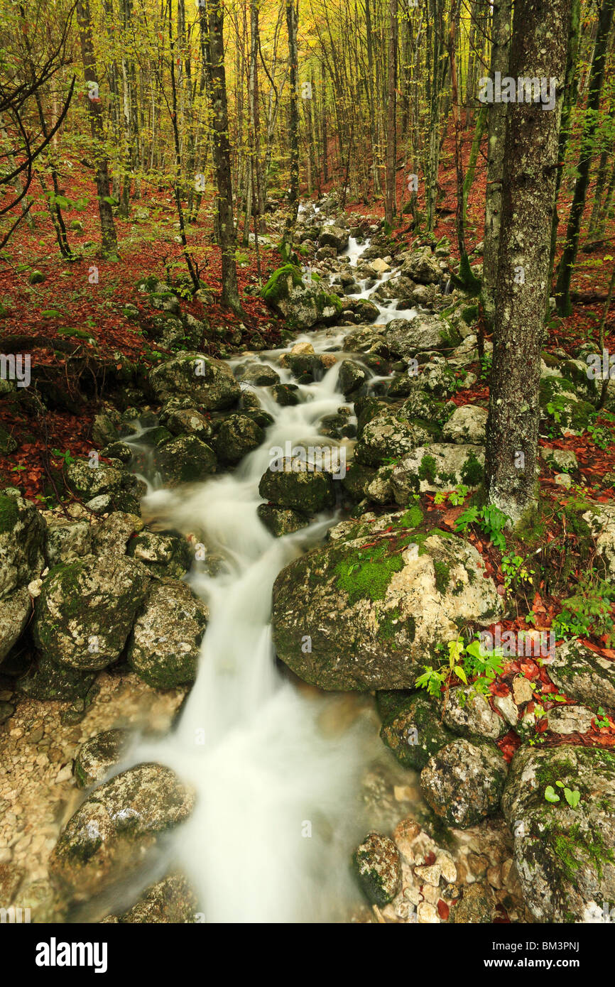 A stream flows through the forest in the Voje Valley near Stara Fuzina, Gorenjska, Slovenia - Stock Image