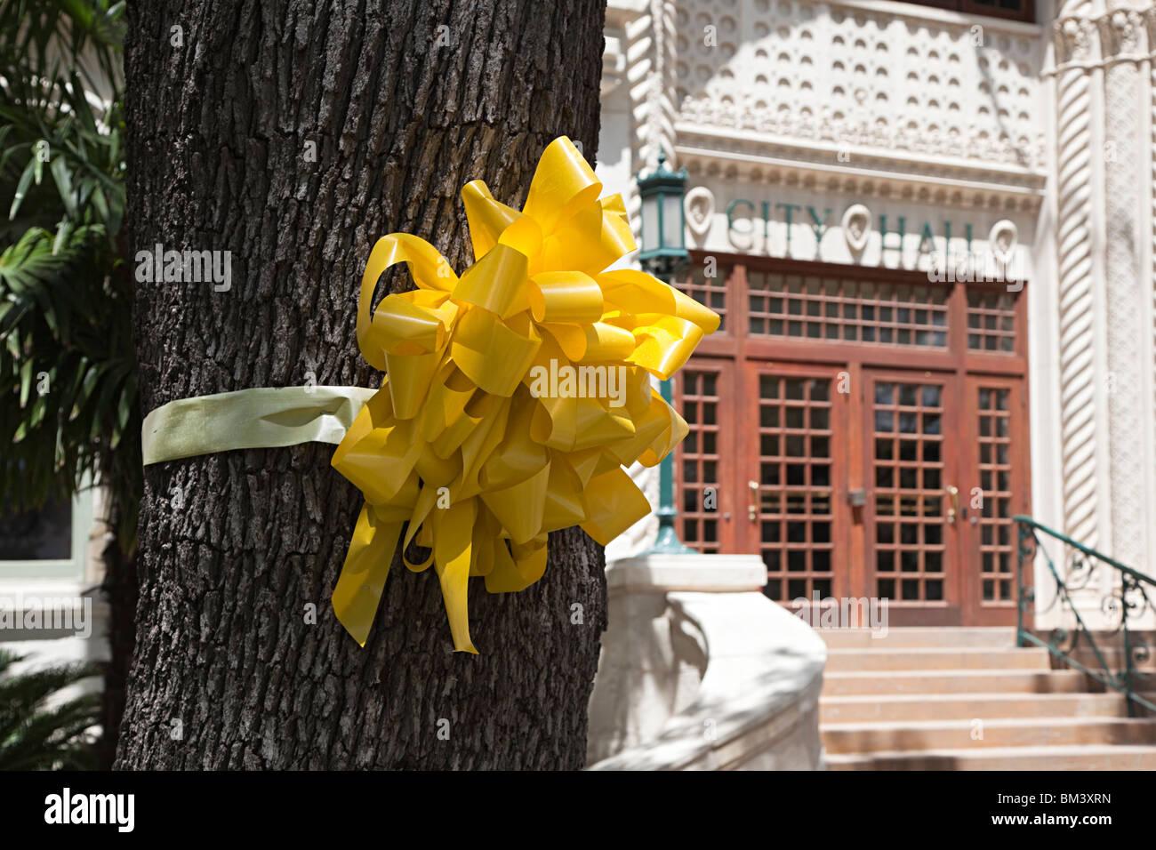 Yellow ribbon tied round tree outside city hall San Antonio Texas USA - Stock Image