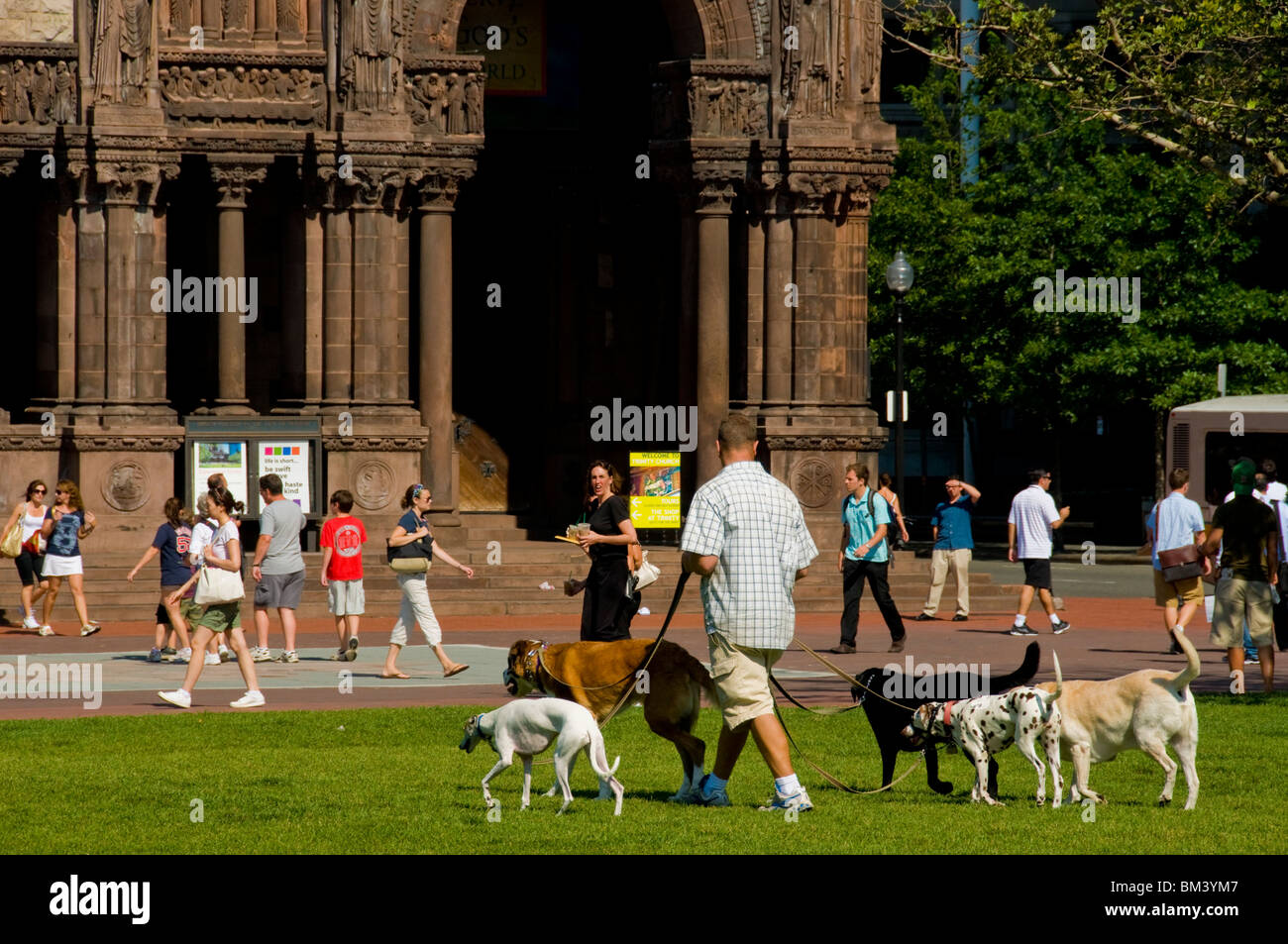 Dog walker downtown Boston - Stock Image