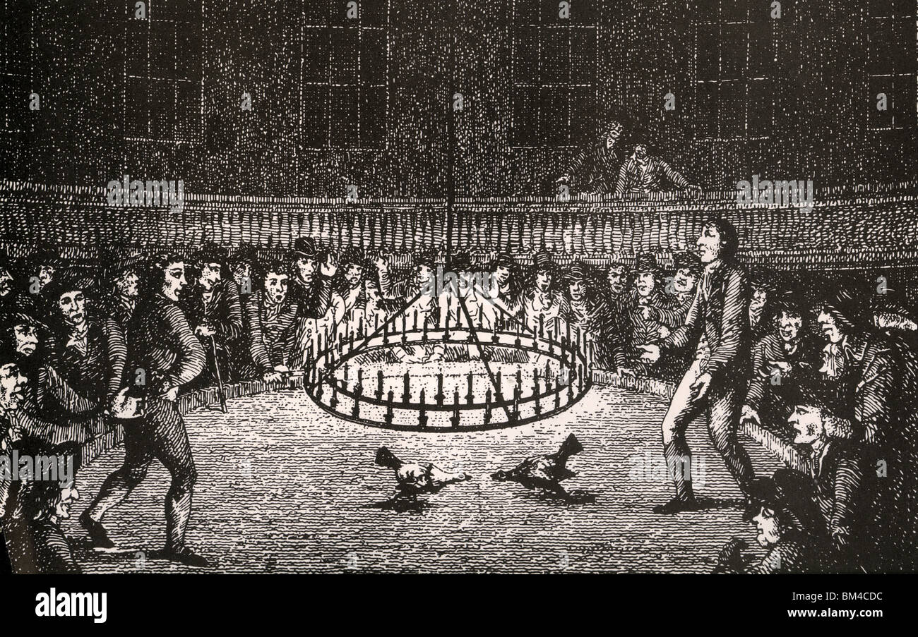 COCKFIGHTING  by night in 18th century London - Stock Image
