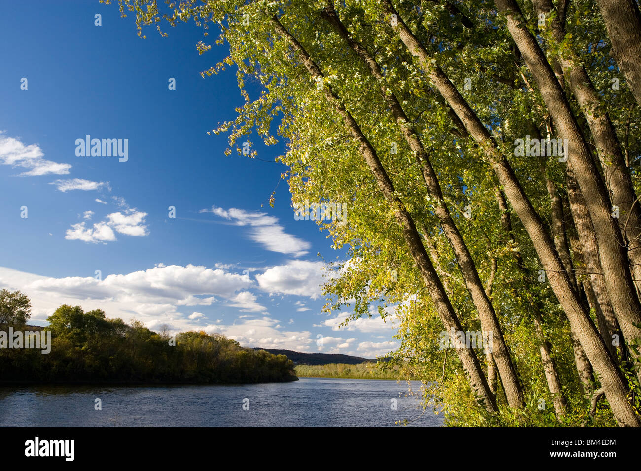 Silver maple trees lean over the Connecticut River at the Sawyer Farm in Walpole, Connecticut. - Stock Image
