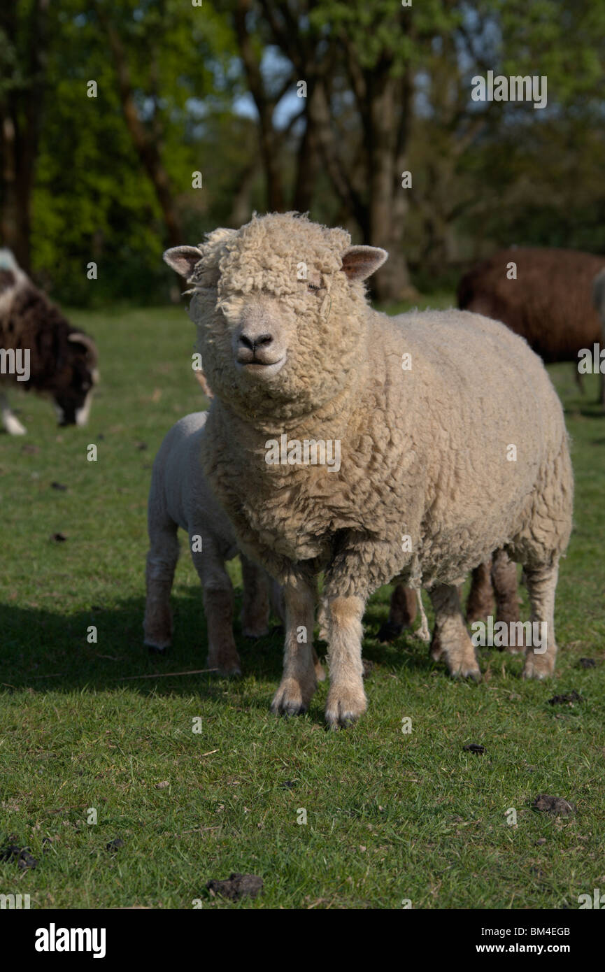 Southdown Stock Photos & Southdown Stock Images - Alamy