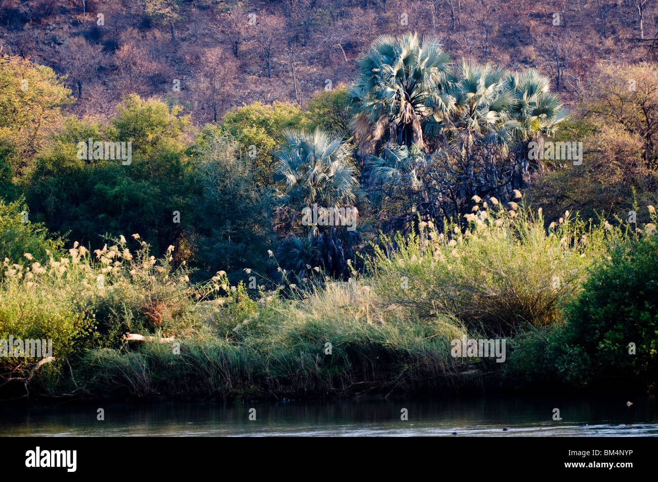 The Kunene river near the kunene river lodge, Kaokoland, Namibia. - Stock Image