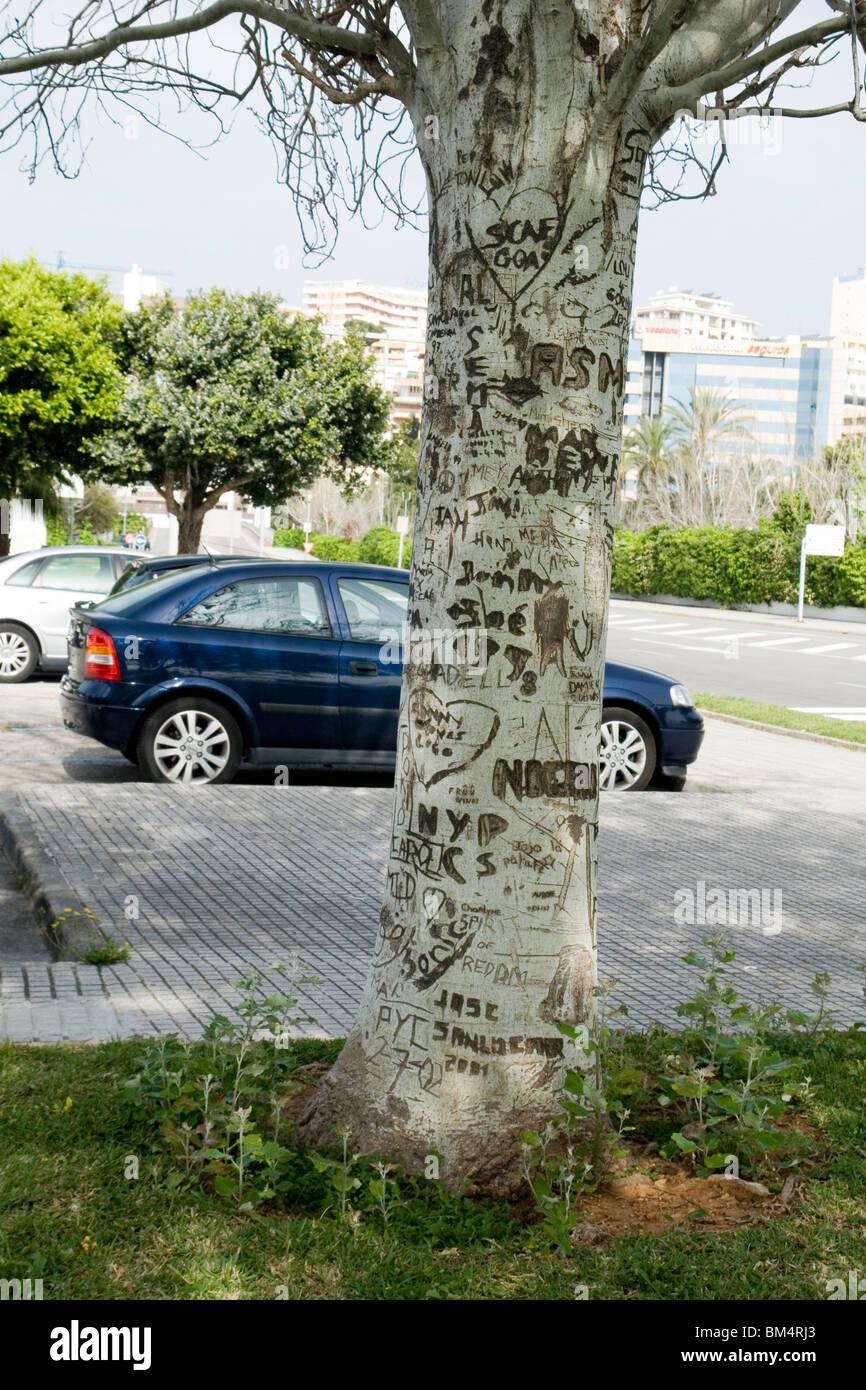 A mutilated tree by knife engravings in Palma de Majorca (Spain). Arbre mutilé par des inscriptions au couteau - Stock Image