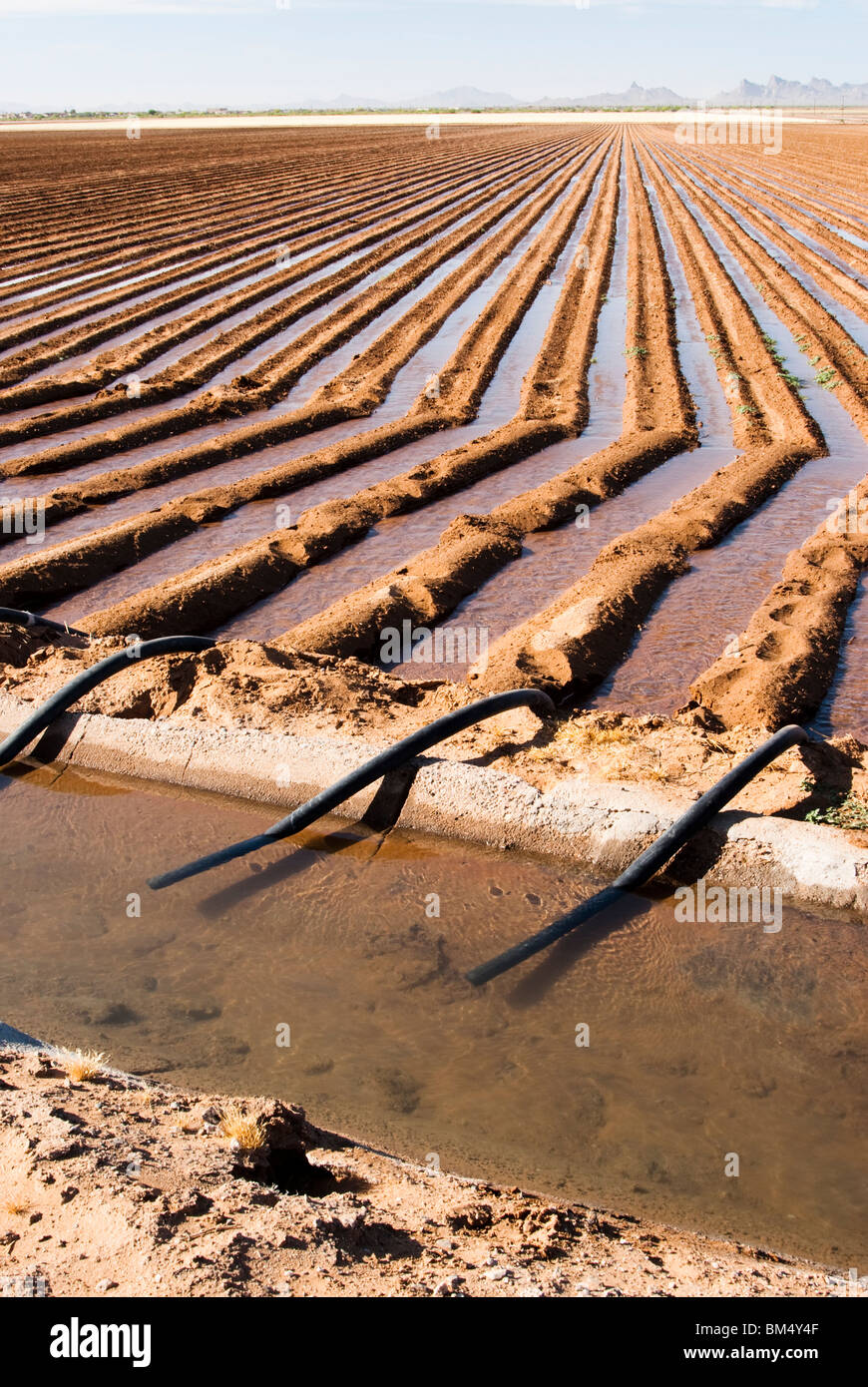 an irrigation canal and siphon tubes used to water a field in Arizona - Stock Image