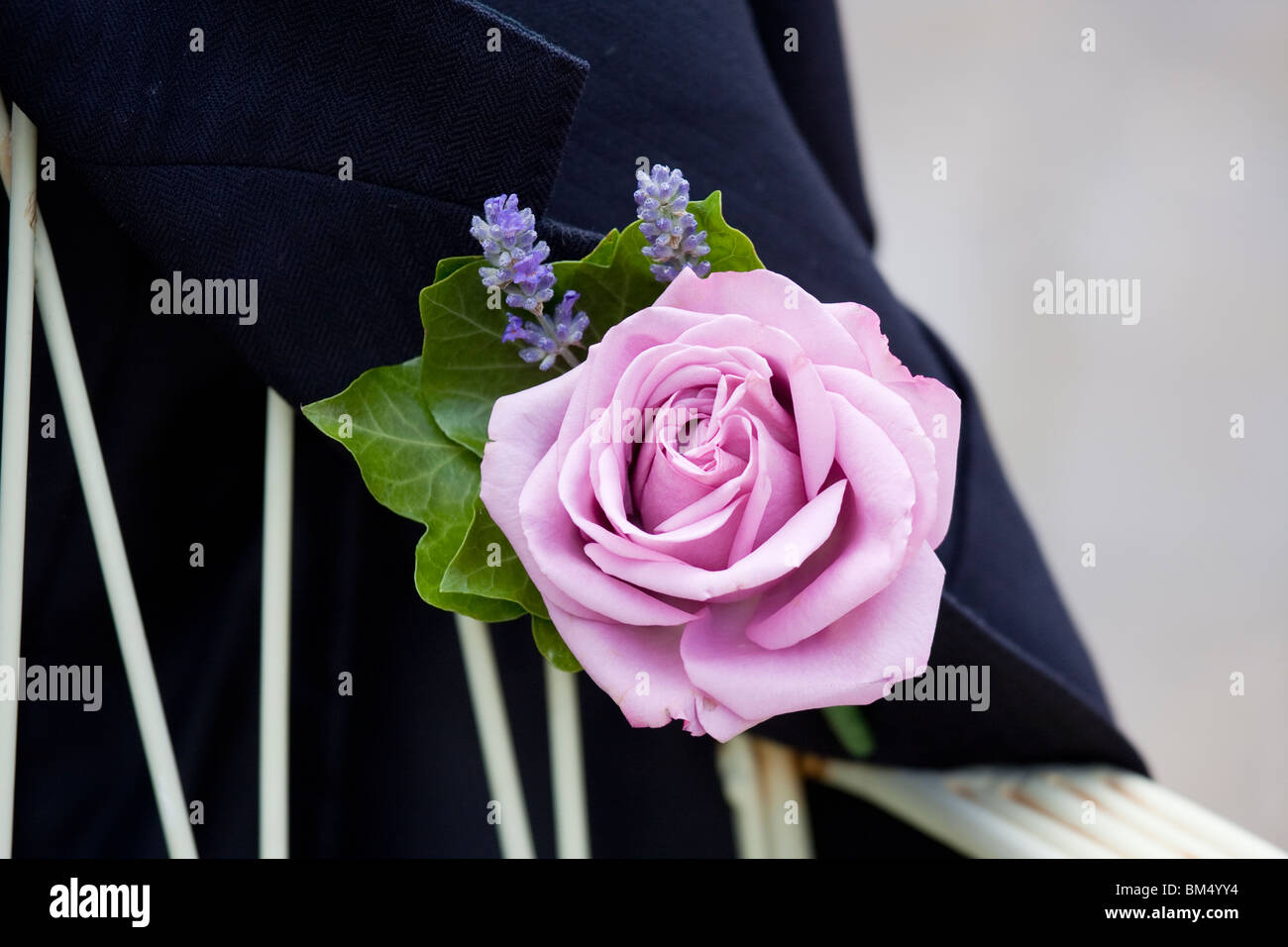 rose button hole flower on a grooms jacket - Stock Image