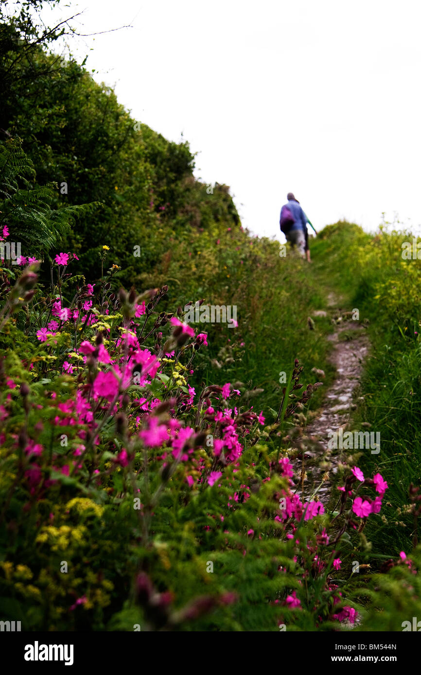 A couple walk along a country pathway on the hills above Polperro with wild flowers in bloom - Stock Image