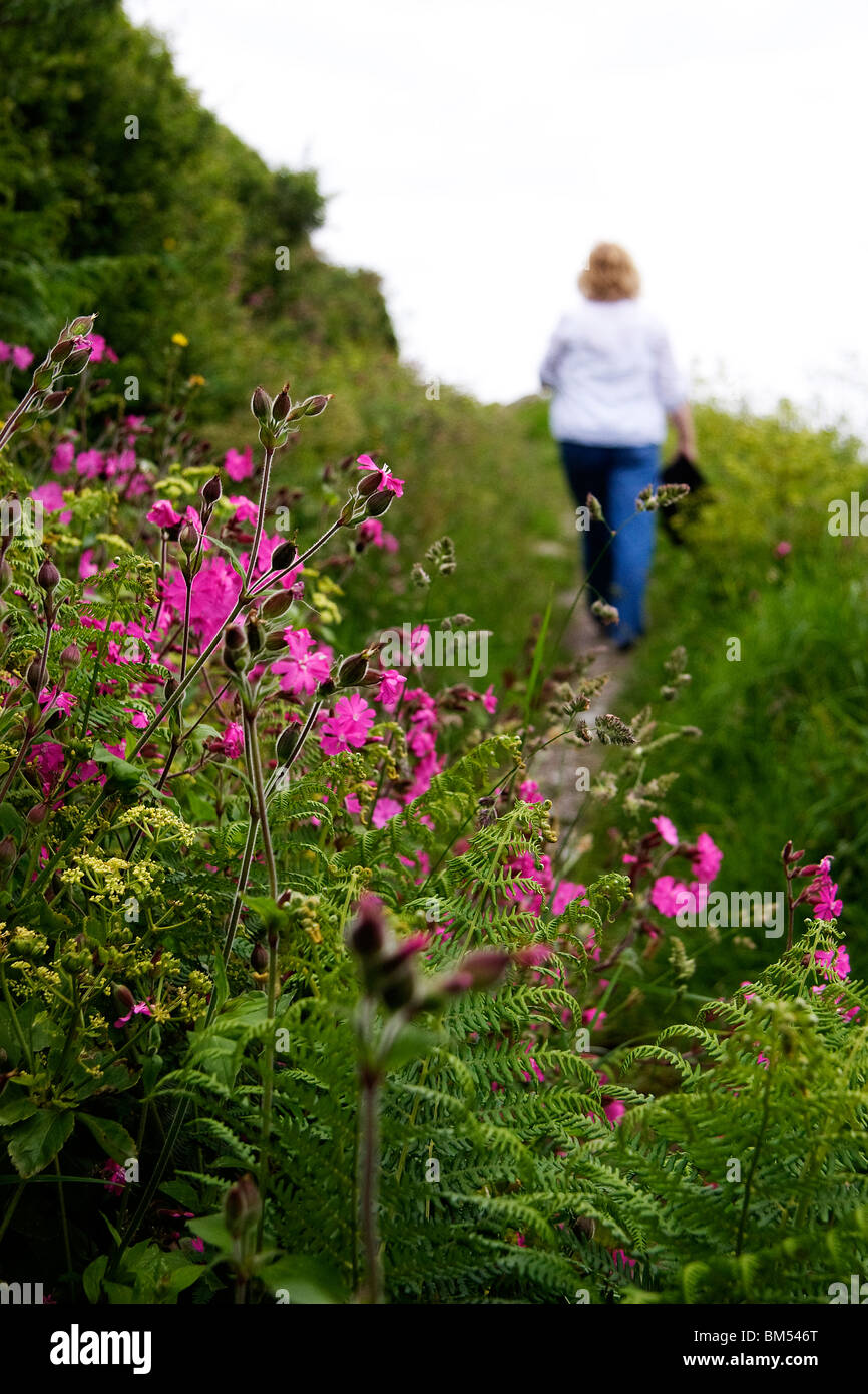 A woman walks along a country pathway on the hills above Polperro with wild flowers in bloom - Stock Image