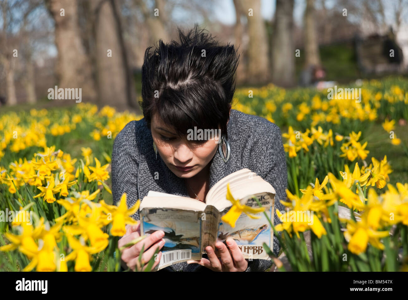 Young woman reading a book amongst the daffodils in St James's Park, London, England, UK - Stock Image