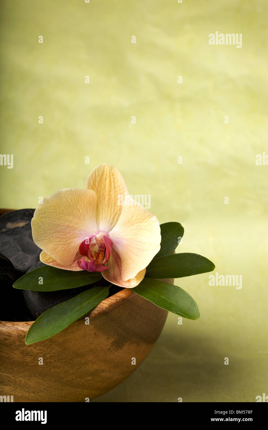 Zen-like scene with flower, copy space - Stock Image