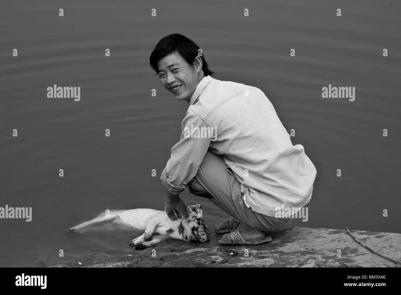 Man Cleaning Pig In The Lake,  Sapa, Vietnam - Stock Image
