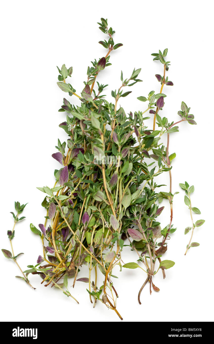 bunch of fresh thyme sprigs - Stock Image
